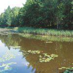 5 Jezioro Mała Kalwa