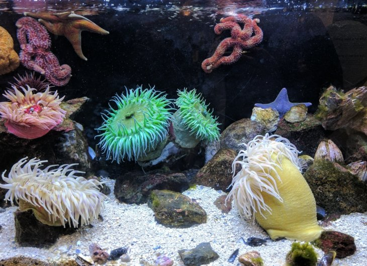 akwarium rybki