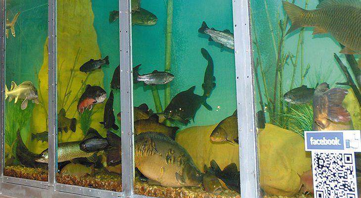 czy-ryba-to-zwierze