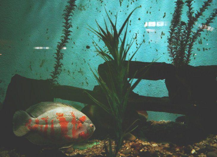 akwarium-rosliny
