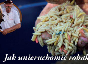 jak-unieruchomic-robaki
