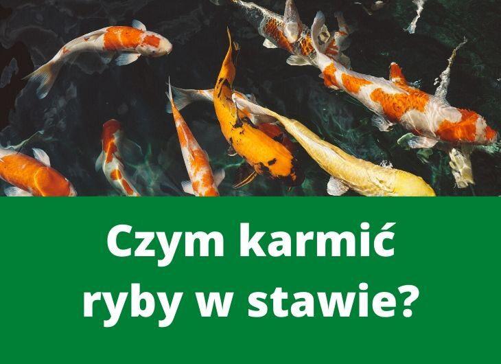 Czym karmić ryby w stawie?