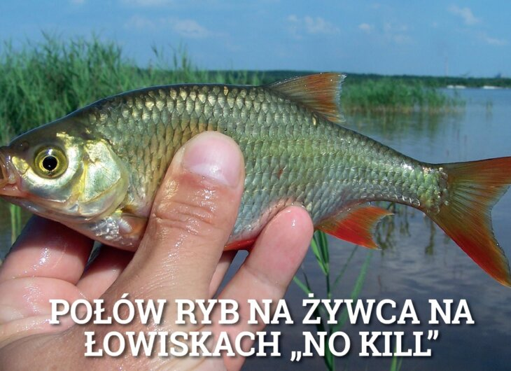 lowiska-nokill