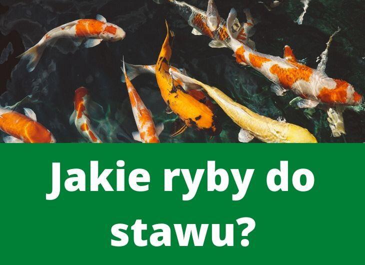 jakie ryby hodować w stawie?